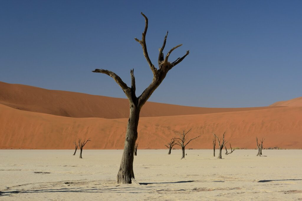 Namibia Wüste Ozeanien Tours