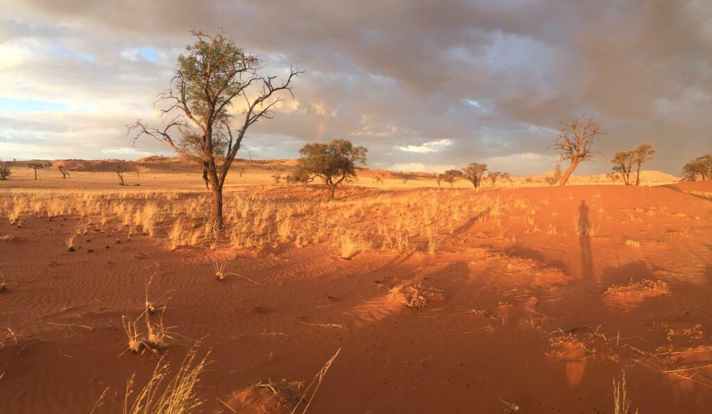 Namibia Wuestenlandschaft im Sueden