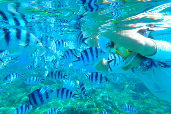 Bora Bora Schnorcheln Ozeanien Tours